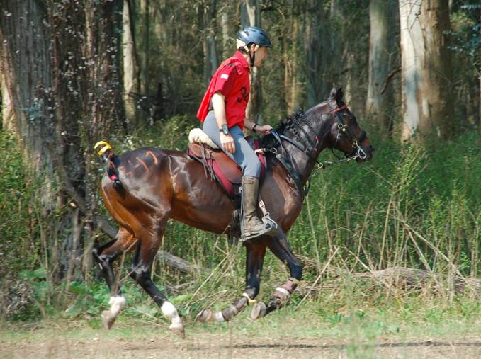 étriers d'équitation avec plancher plat